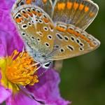 21 de septiembre Comienzo de la Primavera …. flores, mariposas