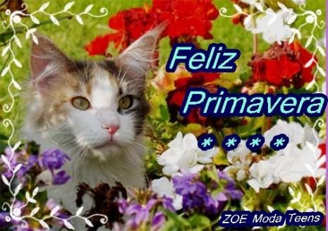 gato_flores+tarjetas+primavera