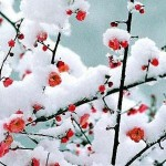 21 de diciembre Solsticio de invierno en el hemisferio Norte