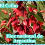 """22 de noviembre: Día de la Flor Nacional """"El Ceibo"""""""
