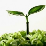 18 de mayo: Día Internacional de la Fascinación por las Plantas