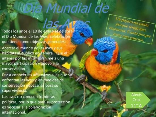 da-internacional-de-las-aves-1-638