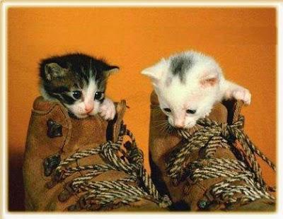 _mascotas+gatitos+tiernas+dia del animal