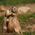 Tarjeta para celebrar el Dia del Animal en Argentina: imágenes para el 29 de abril