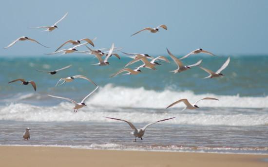 10 de mayo de 2016 – Matanza, captura y comercio ilegal de las aves ...