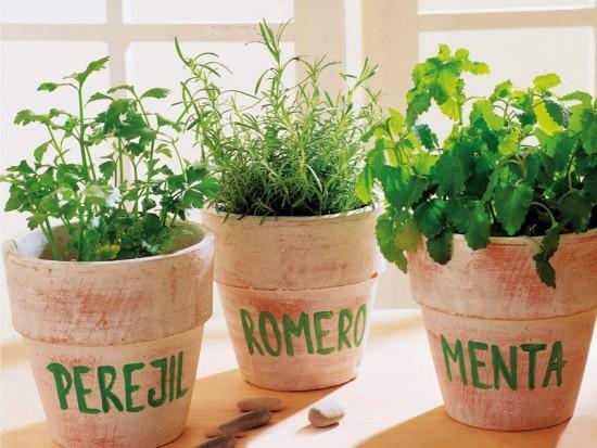 hierba-aromatica-maceta