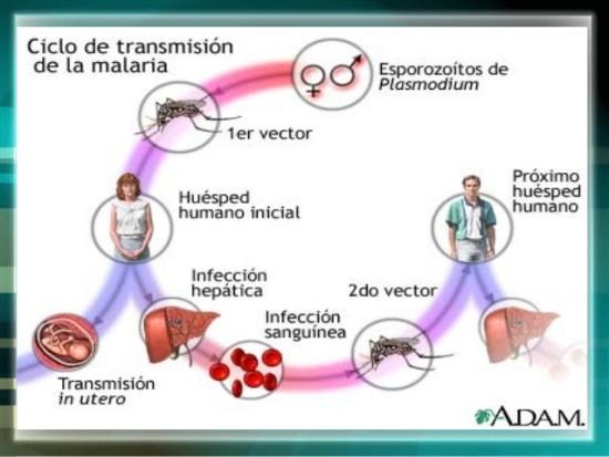manejo-de-paludismo-de-michelle-chavez-8-638