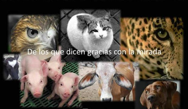 animales-veterinario