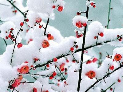solsticio de invierno en el hemisferio norte 21 de dic