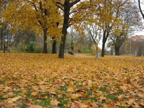 otoño-588x441