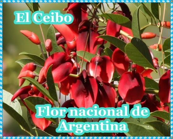 ceibo-arbo flor nacional