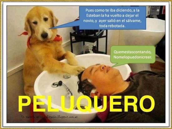 p canino