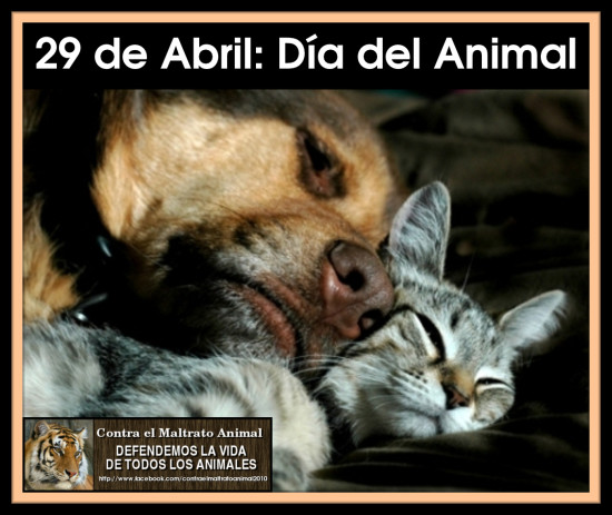 29 de abril Dia del Animal