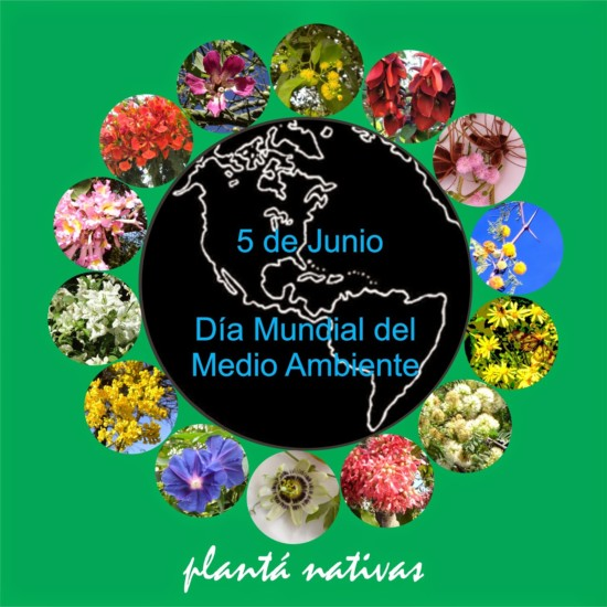 A Dia Mundial del Medio Ambiente