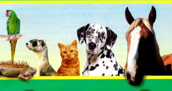 consulta-veterinaria-vetbul-dr-hector-astudillo-saldia-medico-veterinario-maipu