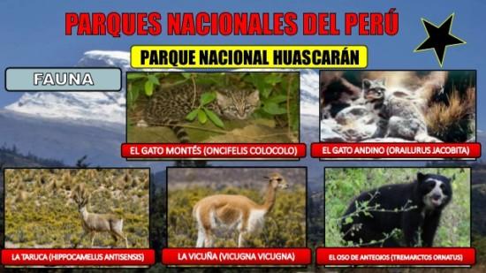 reas-naturales-protegidas-del-per-1-parque-nacional-y-reserva-del-per-pn-24-638