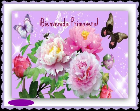 mariposas-bonitas-920957_800