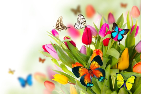 tributo-a-la-primavera-con-flores-y-mariposas-de-colores